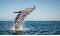 BITCOIN WHALE MOVED $1 BILLION, BUT WHO WAS IT?
