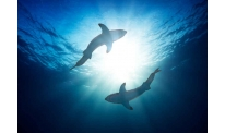 SharkPool confronts Bitcoin altcoins